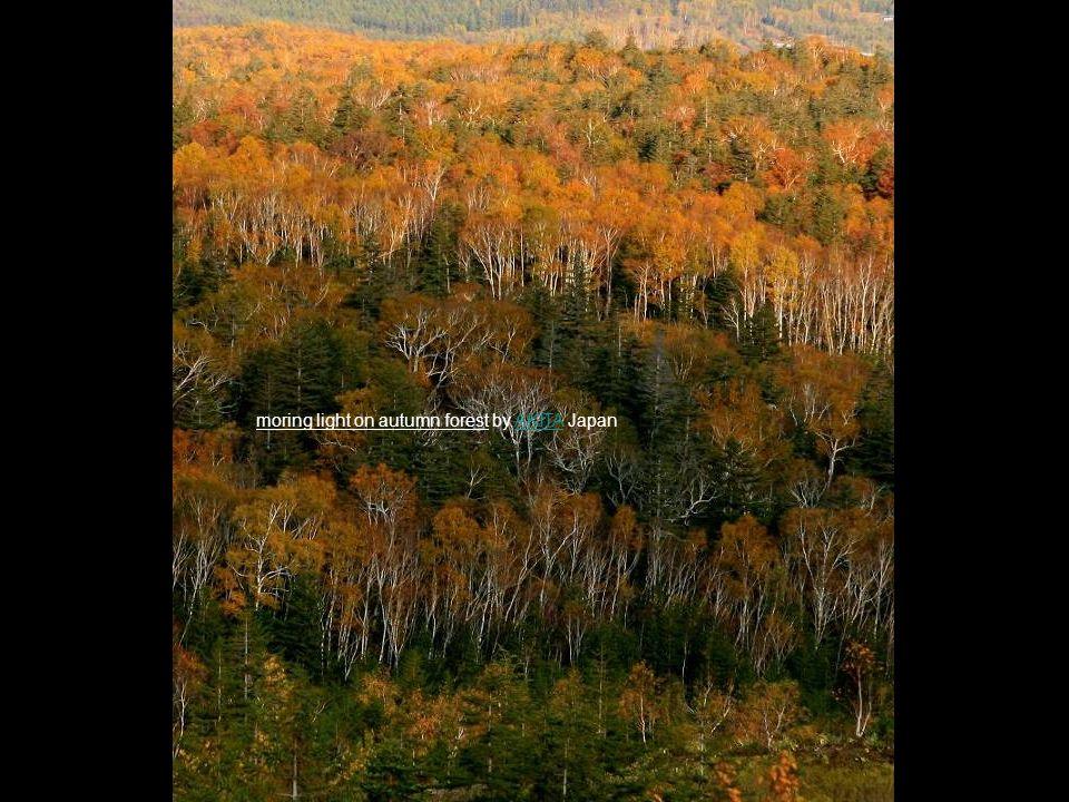 moring light on autumn forest by AKITA JapanAKITA
