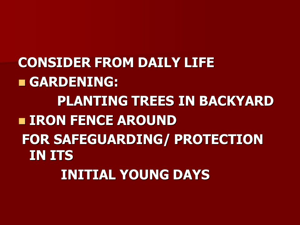 CONSIDER FROM DAILY LIFE GARDENING: GARDENING: PLANTING TREES IN BACKYARD PLANTING TREES IN BACKYARD IRON FENCE AROUND IRON FENCE AROUND FOR SAFEGUARDING/ PROTECTION IN ITS FOR SAFEGUARDING/ PROTECTION IN ITS INITIAL YOUNG DAYS INITIAL YOUNG DAYS