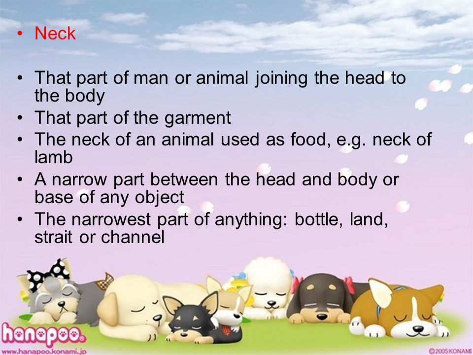 Neck That part of man or animal joining the head to the body That part of the garment The neck of an animal used as food, e.g. neck of lamb A narrow p