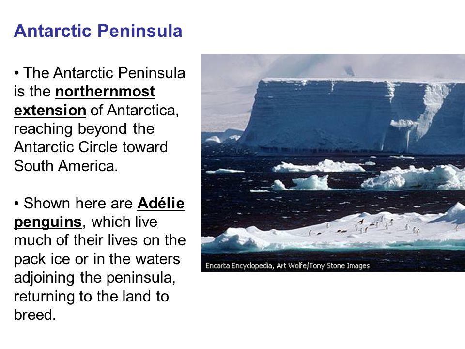 Antarctic Peninsula The Antarctic Peninsula is the northernmost extension of Antarctica, reaching beyond the Antarctic Circle toward South America.