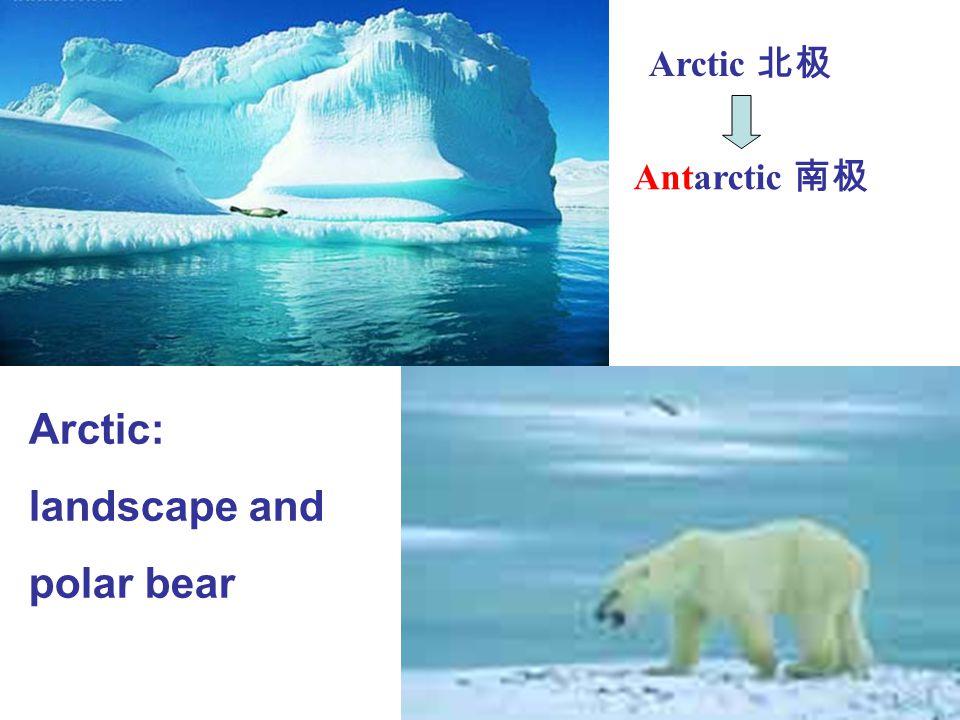 Arctic: landscape and polar bear Arctic 北极 Antarctic 南极