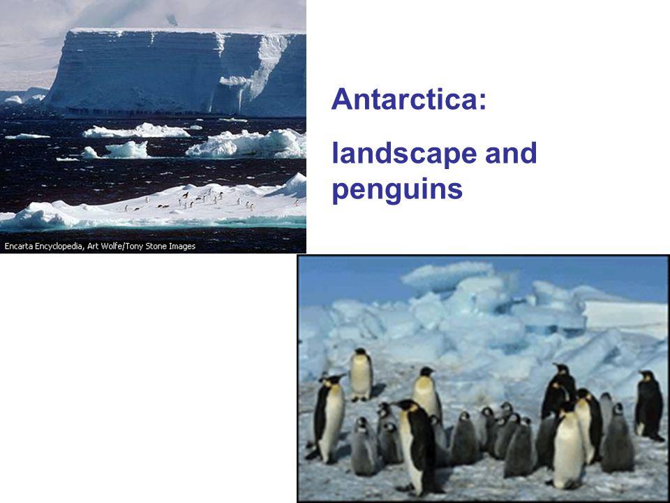 Antarctica: landscape and penguins