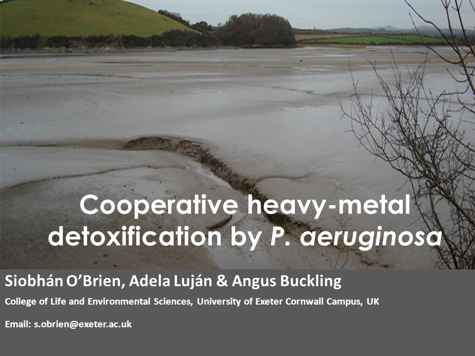 Siobhán O'Brien, Adela Luján & Angus Buckling College of Life and Environmental Sciences, University of Exeter Cornwall Campus, UK Email: s.obrien@exeter.ac.uk Cooperative heavy-metal detoxification by P.