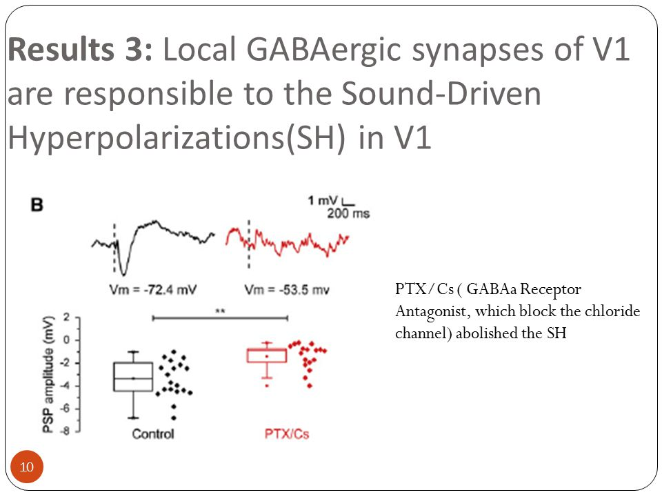Results 3: Local GABAergic synapses of V1 are responsible to the Sound-Driven Hyperpolarizations(SH) in V1 PTX/Cs ( GABAa Receptor Antagonist, which b