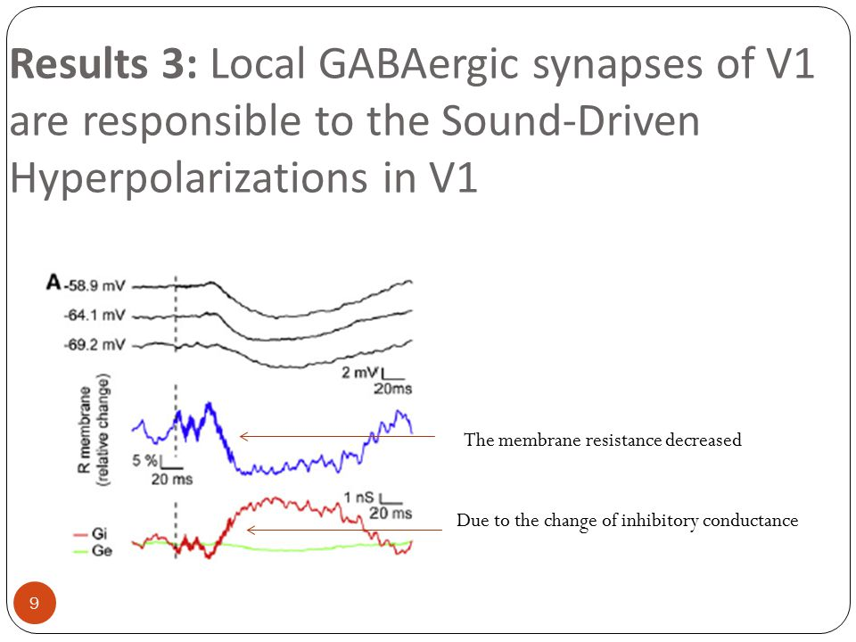 Acoustic simulation strongly diminished V-CMRs when presented simultaneously to the flash 20