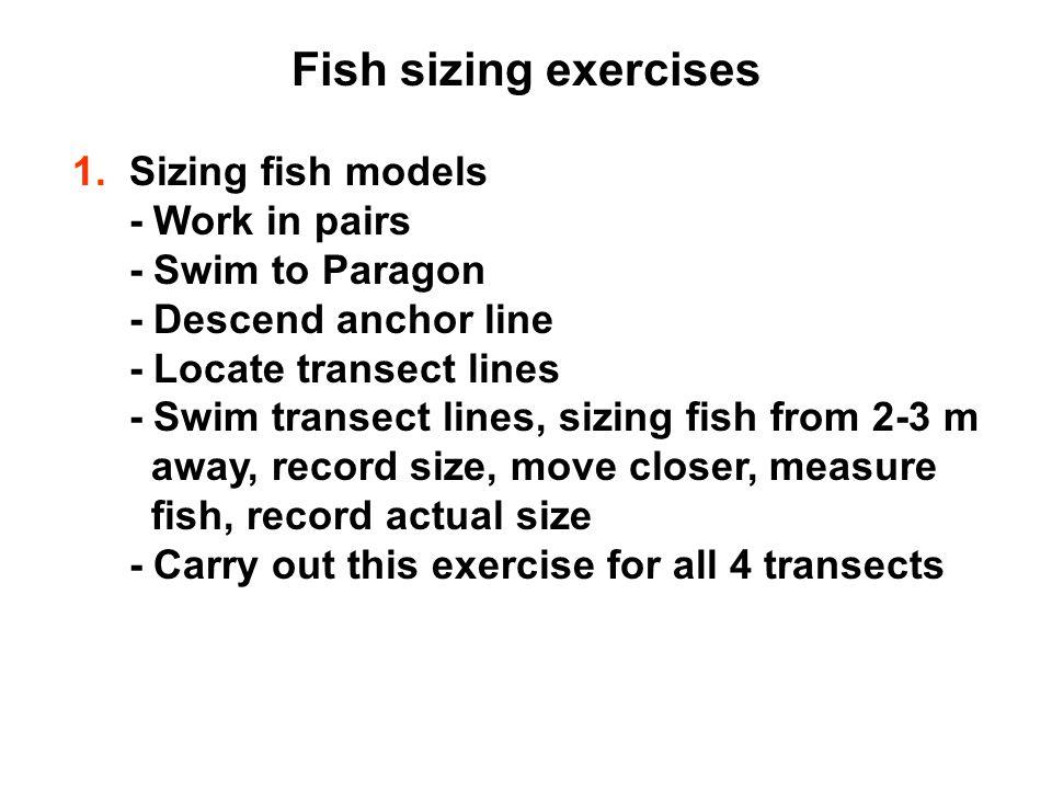 Fish sizing exercises 1.