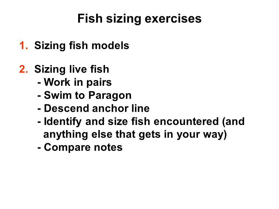 Fish sizing exercises 1. Sizing fish models 2.