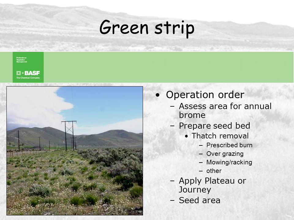 Conservation Targets and Goals Fuel Breaks Green strips Restoration –Release –Re-vegetating After Fire Restoration