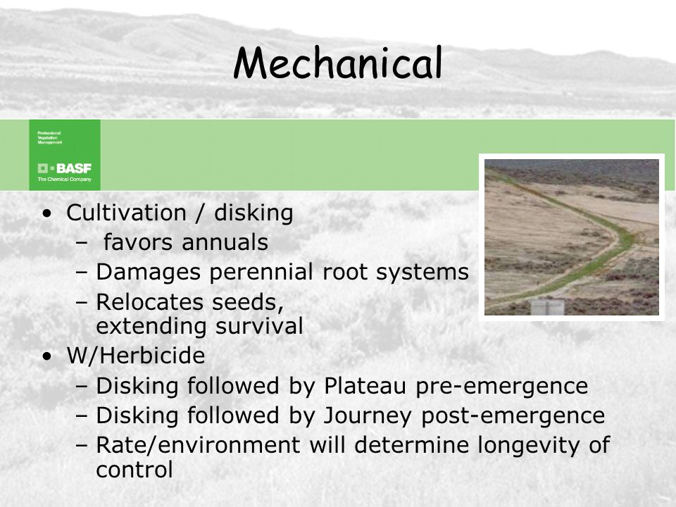 Mechanical Mowing –Clipped 12x in one season, still produced a seedhead –Reduces cheatgrass height / potential flame length W/Herbicide –Promotes duff layer breakdown –Utilize constant mowing or mowing/raking to prepare for herbicide treatment