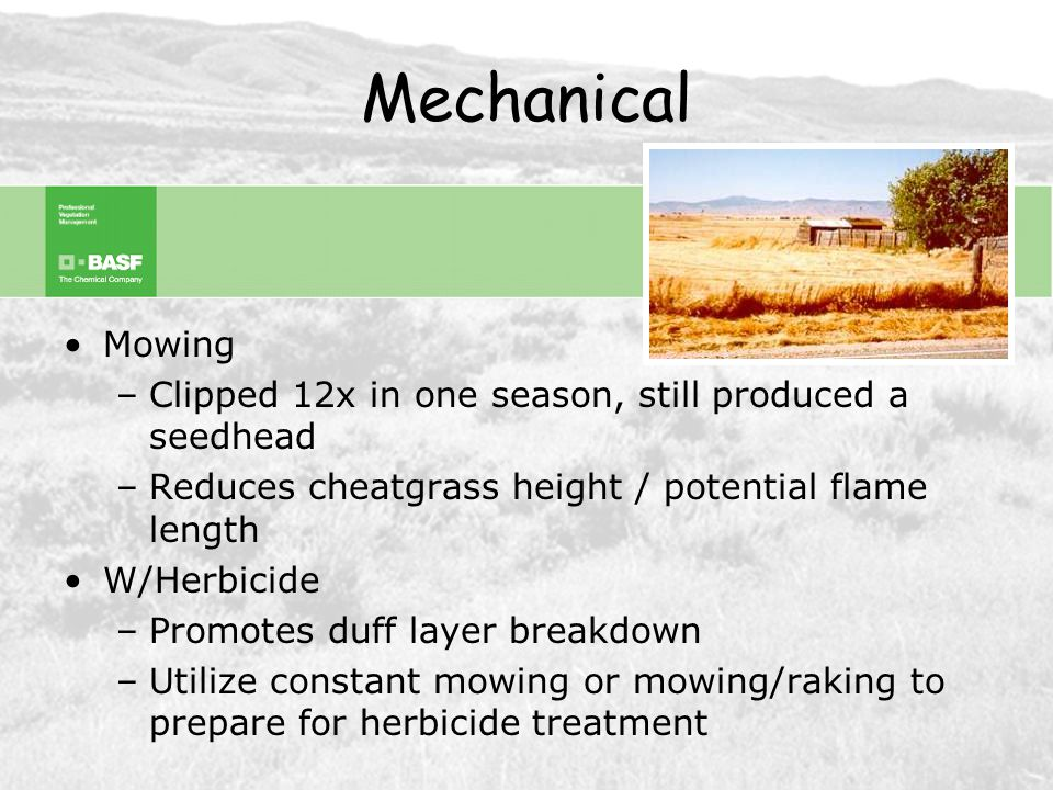 Cultural Fire –Theory: Three consecutive burns can reduce populations Reduce desirable species Difficulty carrying fire 3 rd year Results =~ 50% control –Fall burn typically promotes annuals / fire loving –Brush fire typically destroys cheatgrass seed W/Herbicide –Use fire to remove duff layer –Allow ~2wks for carbon to blow off –Apply PLATEAU or JOURNEY