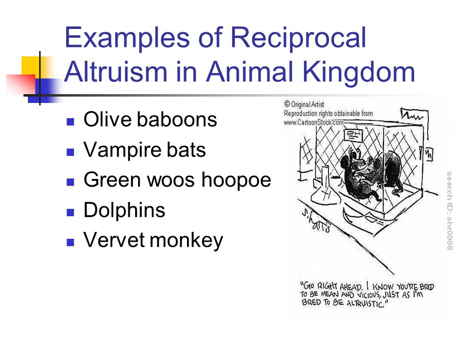 Examples of Reciprocal Altruism in Animal Kingdom Olive baboons Vampire bats Green woos hoopoe Dolphins Vervet monkey