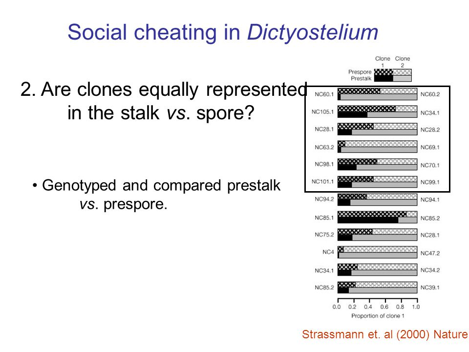 Strassmann et. al (2000) Nature Social cheating in Dictyostelium 2. Are clones equally represented in the stalk vs. spore? Genotyped and compared pres