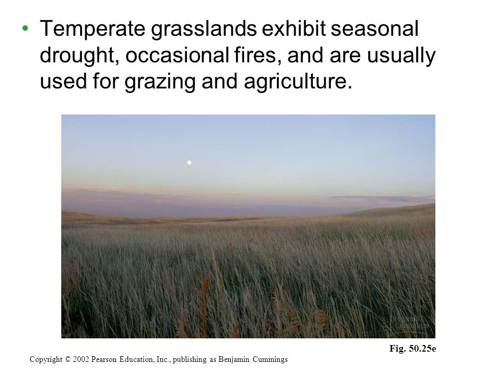 Temperate grasslands exhibit seasonal drought, occasional fires, and are usually used for grazing and agriculture.