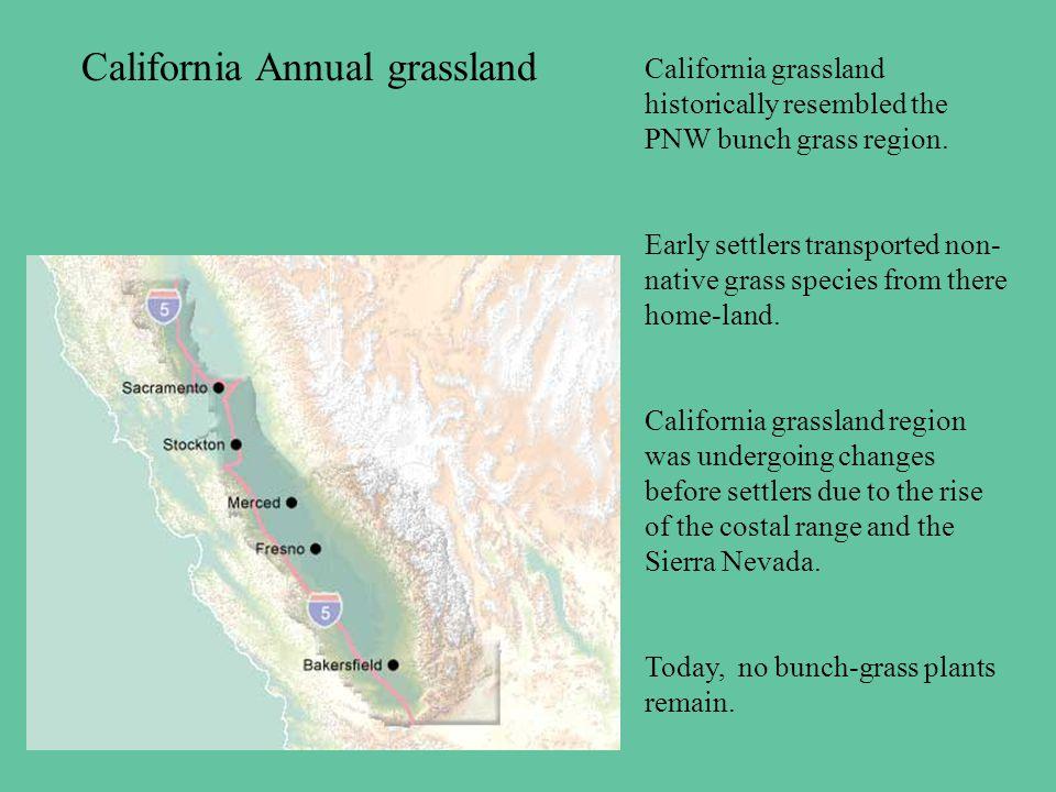 California Annual grassland California grassland historically resembled the PNW bunch grass region.