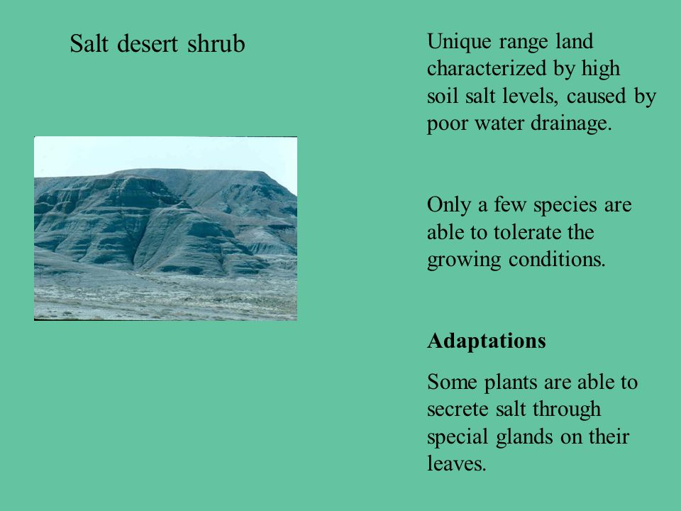 Salt desert shrub Unique range land characterized by high soil salt levels, caused by poor water drainage.
