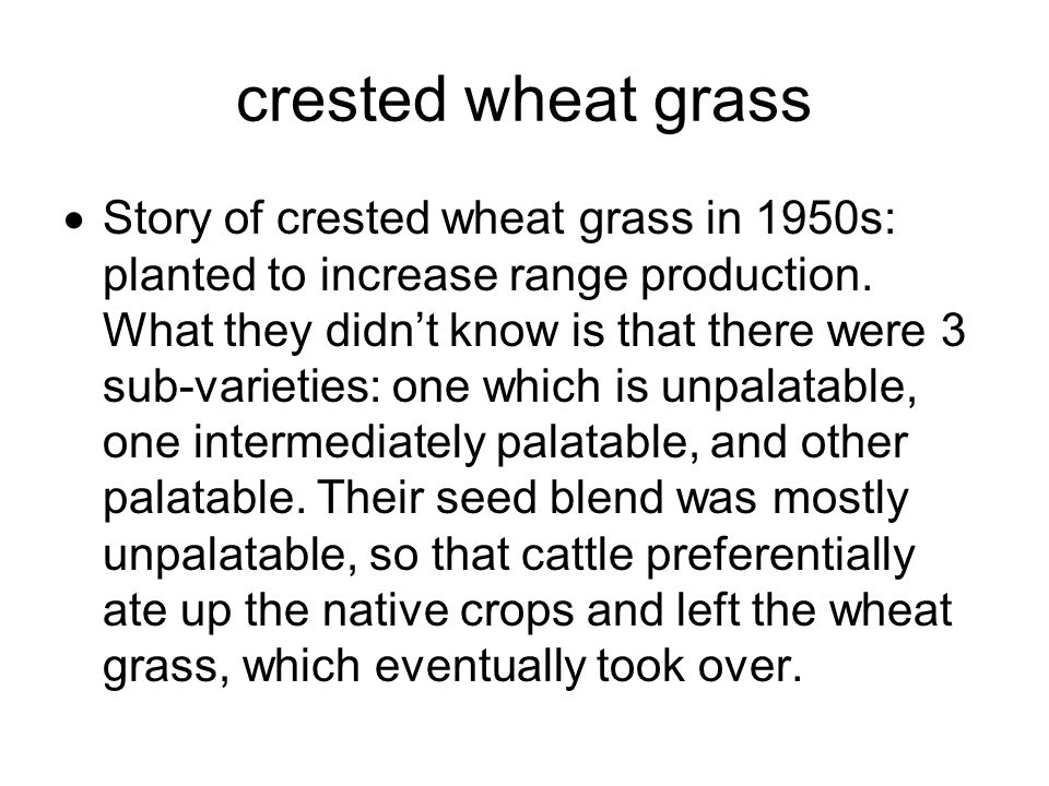crested wheat grass  Story of crested wheat grass in 1950s: planted to increase range production.