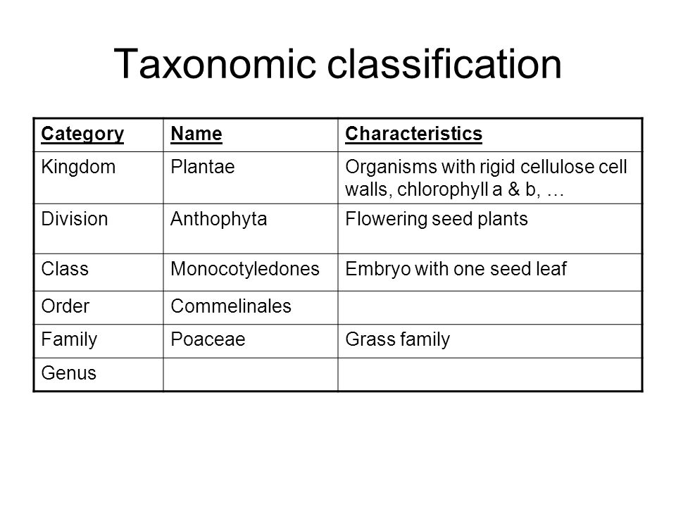 Taxonomic classification CategoryNameCharacteristics KingdomPlantaeOrganisms with rigid cellulose cell walls, chlorophyll a & b, … DivisionAnthophytaFlowering seed plants ClassMonocotyledonesEmbryo with one seed leaf OrderCommelinales FamilyPoaceaeGrass family Genus