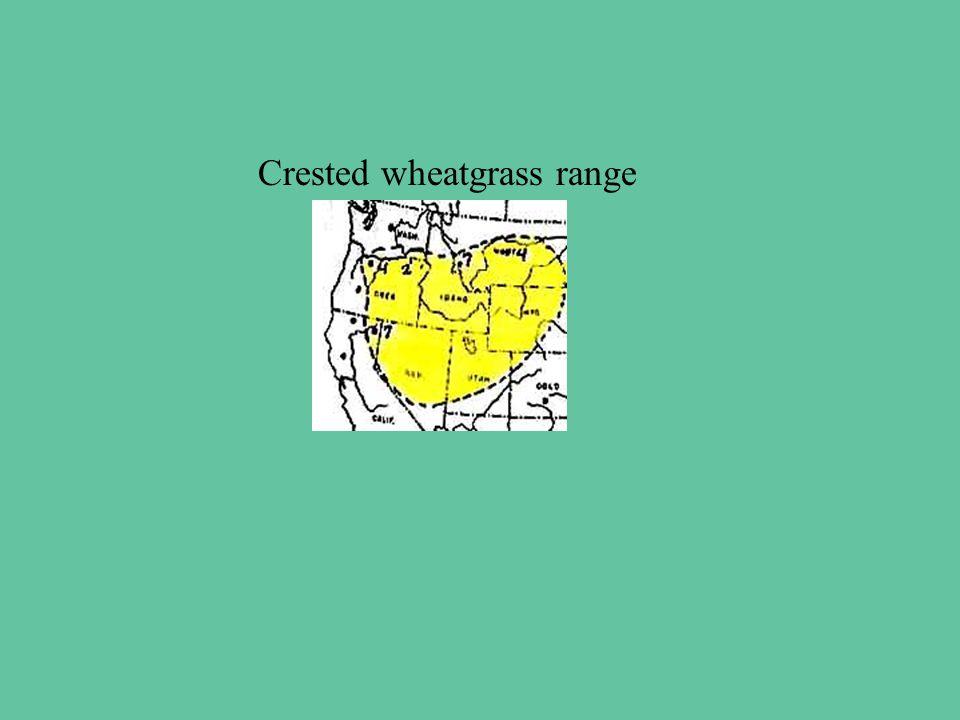 Crested wheatgrass range