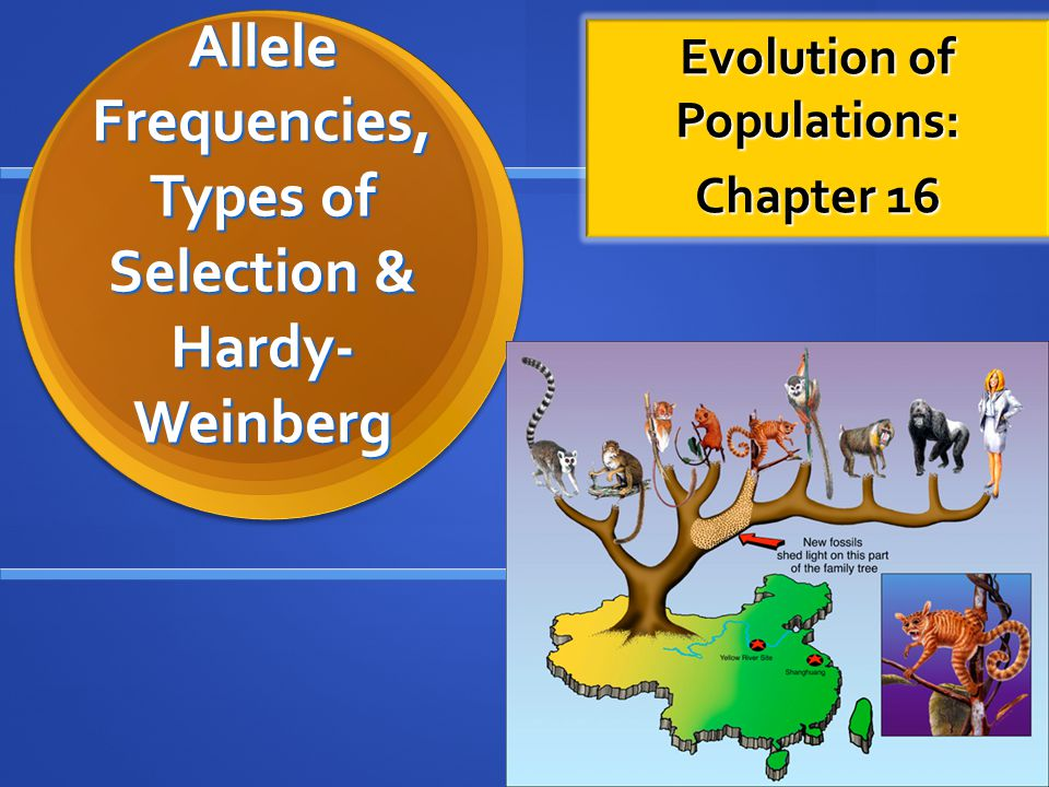 Allele Frequencies, Types of Selection & Hardy- Weinberg Evolution of Populations: Chapter 16