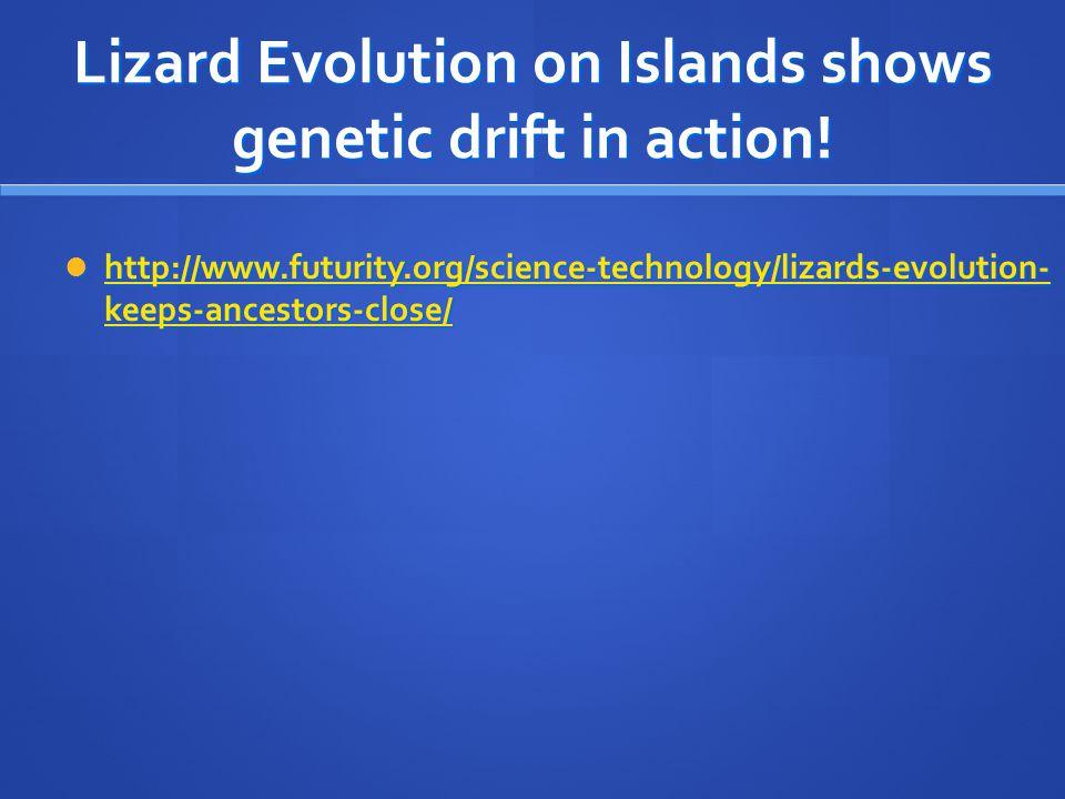 Lizard Evolution on Islands shows genetic drift in action! http://www.futurity.org/science-technology/lizards-evolution- keeps-ancestors-close/ http:/