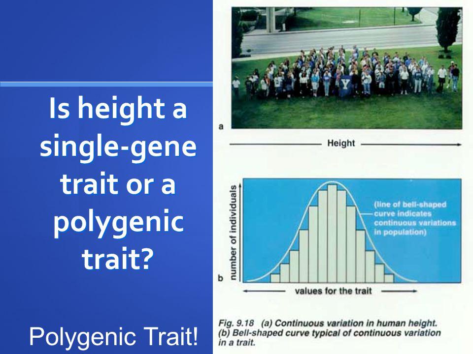 Is height a single-gene trait or a polygenic trait? Polygenic Trait!