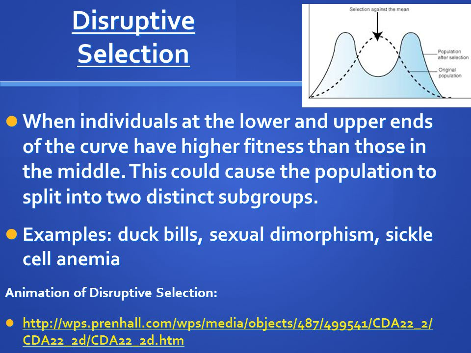 Disruptive Selection When individuals at the lower and upper ends of the curve have higher fitness than those in the middle. This could cause the popu