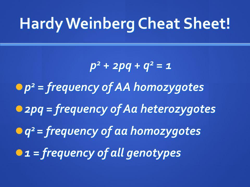 Hardy Weinberg Cheat Sheet! p 2 + 2pq + q 2 = 1 p 2 = frequency of AA homozygotes p 2 = frequency of AA homozygotes 2pq = frequency of Aa heterozygote