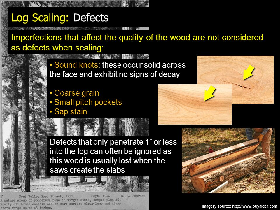 Log Scaling: Defects Imperfections that affect the quality of the wood are not considered as defects when scaling: Imagery source: http://www.buyalder.com Sound knots: these occur solid across the face and exhibit no signs of decay Coarse grain Small pitch pockets Sap stain Defects that only penetrate 1 or less into the log can often be ignored as this wood is usually lost when the saws create the slabs