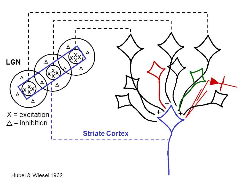 Striate Cortex (V1) 1 deg IT face cell Tsao et al. 2006