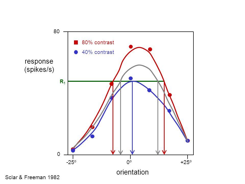 x x x x x x x x x x x x Hubel & Wiesel 1962 LGN Striate Cortex X = excitation = inhibition + + +
