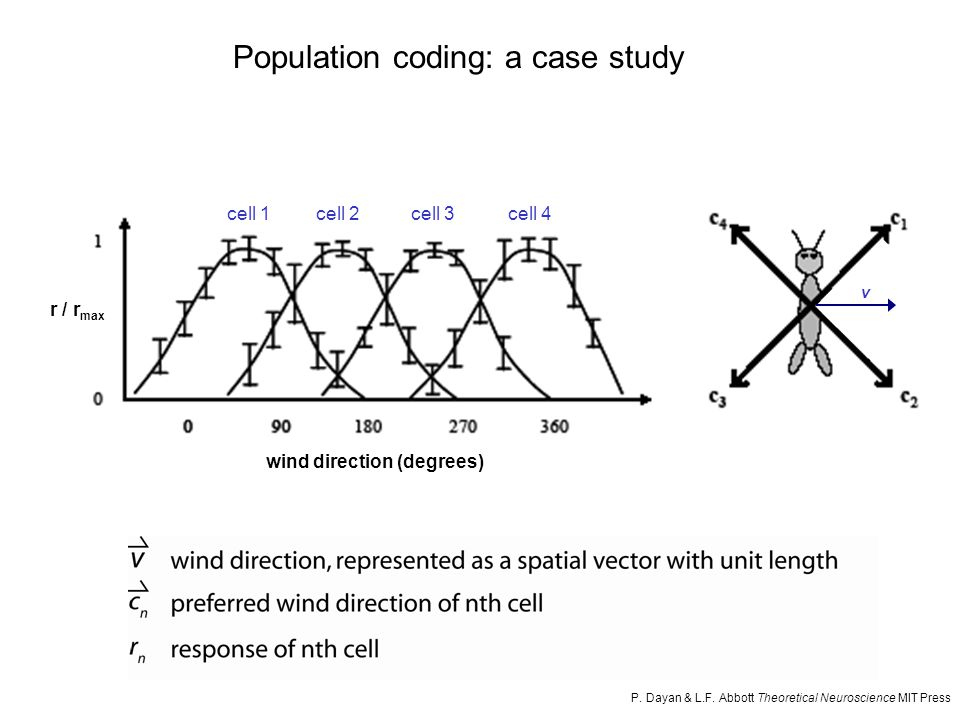 see http://www.biol.sc.edu/~vogt/courses/neuro/neurolabs.html the cricket wind direction sensing system (second-order neurons) Population coding: a case study First-order neuron projections to the terminal ganglion are organized according to preferred wind direction.