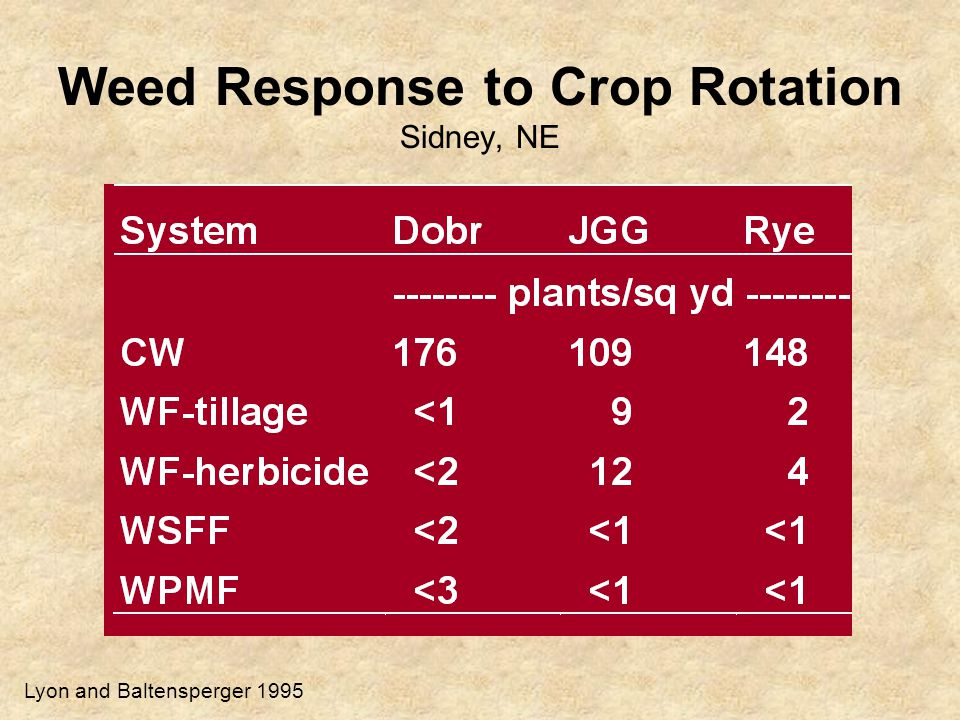 Weed Response to Crop Rotation Sidney, NE Lyon and Baltensperger 1995