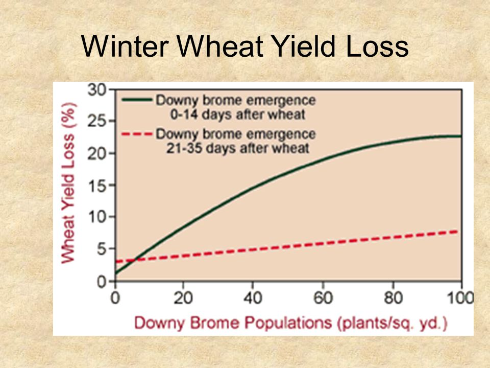 Winter Wheat Yield Loss