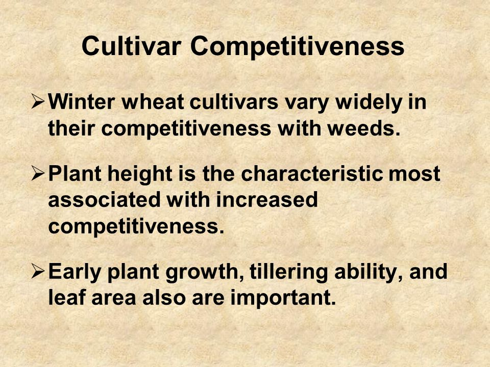 Cultivar Competitiveness  Winter wheat cultivars vary widely in their competitiveness with weeds.