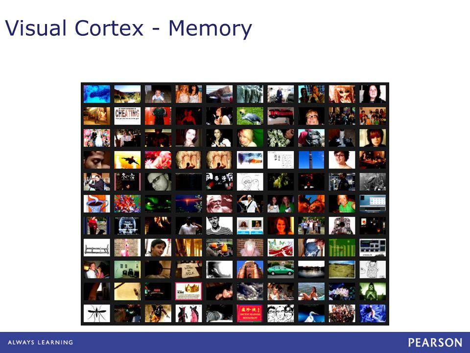 Visual Cortex - Memory
