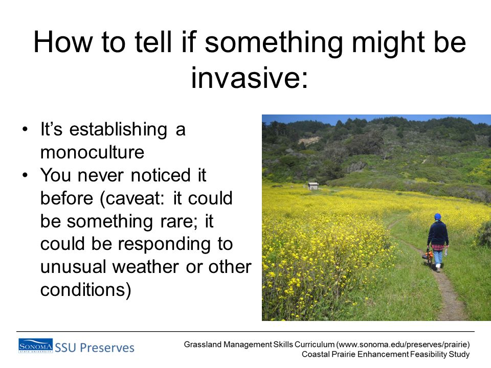 How to tell if something might be invasive: It's establishing a monoculture You never noticed it before (caveat: it could be something rare; it could be responding to unusual weather or other conditions)