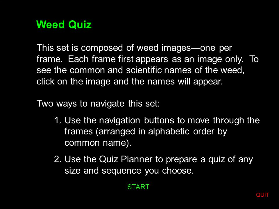 Weed Quiz This set is composed of weed images—one per frame.