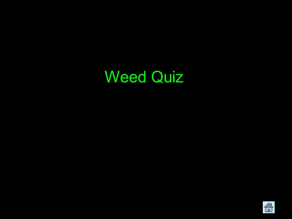 Weed Quiz