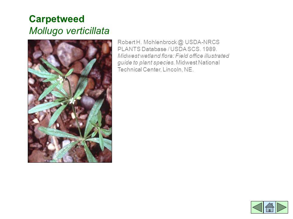 Robert H. Mohlenbrock @ USDA-NRCS PLANTS Database / USDA SCS.