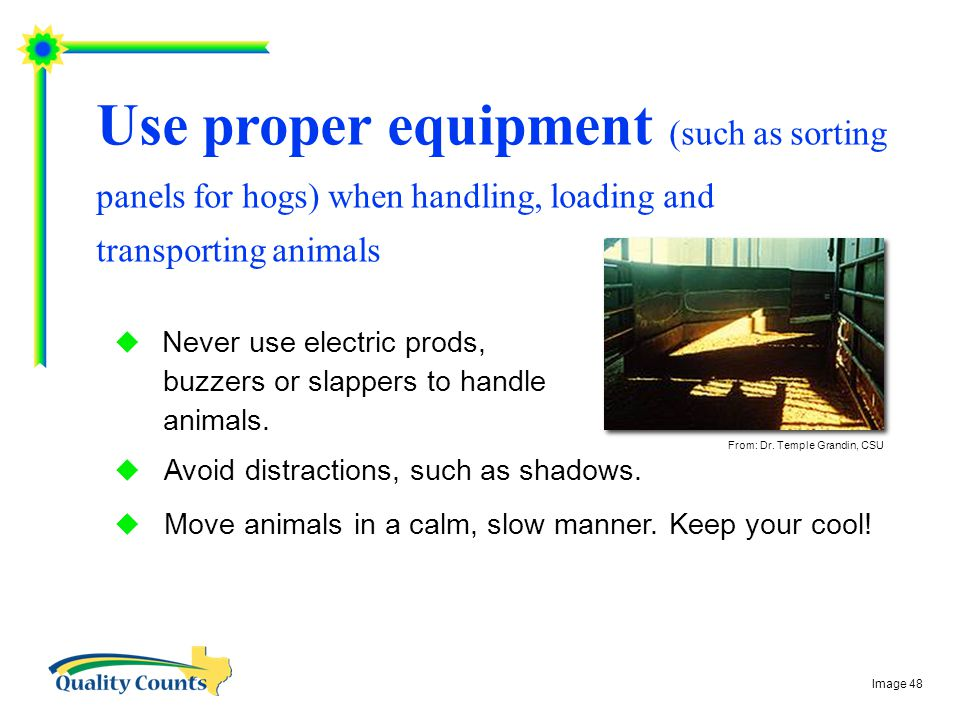 Use proper equipment (such as sorting panels for hogs) when handling, loading and transporting animals  Never use electric prods, buzzers or slappers to handle animals.