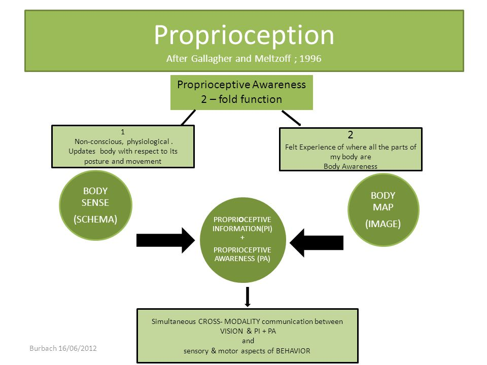 Proprioception After Gallagher and Meltzoff ; 1996 Proprioceptive Awareness 2 – fold function 2 Felt Experience of where all the parts of my body are