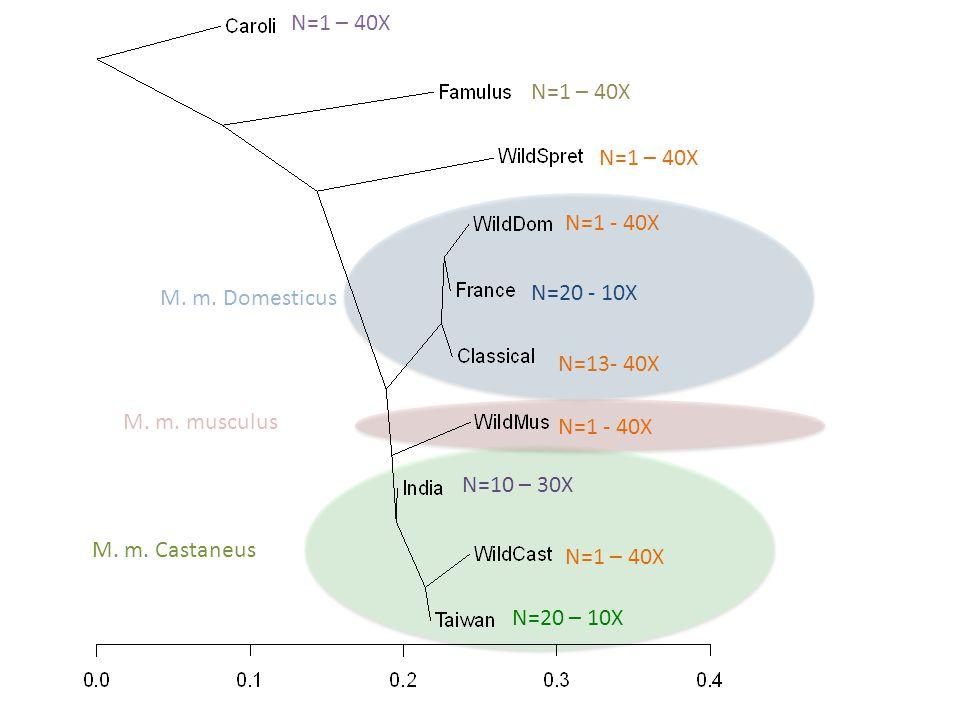 N=1 – 40X N=1 - 40X N=1 – 40X N=20 – 10X N=10 – 30X N=20 - 10X N=13- 40X M. m. Domesticus M. m. Castaneus M. m. musculus