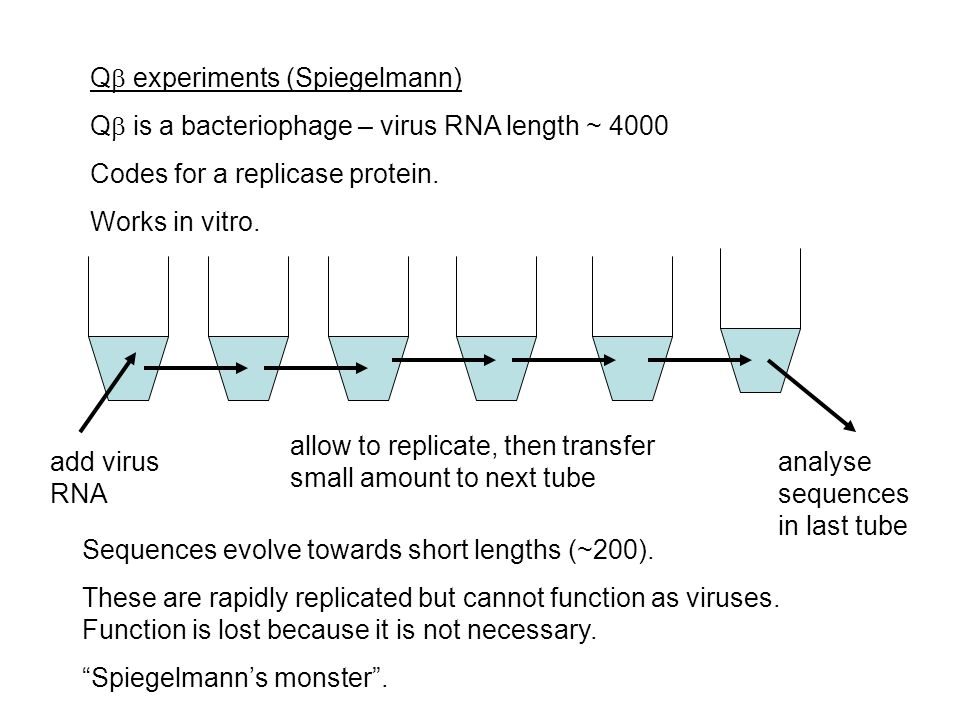 Q  experiments (Spiegelmann) Q  is a bacteriophage – virus RNA length ~ 4000 Codes for a replicase protein.