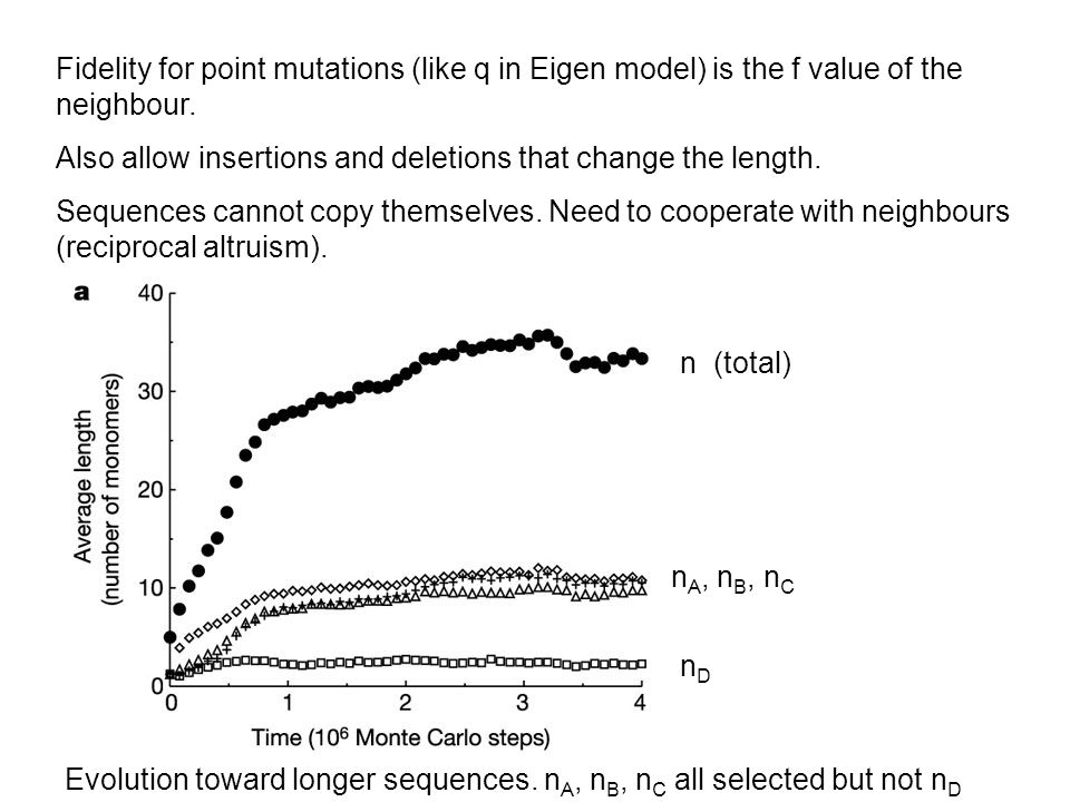 n (total) n A, n B, n C nDnD Evolution toward longer sequences. n A, n B, n C all selected but not n D Fidelity for point mutations (like q in Eigen m