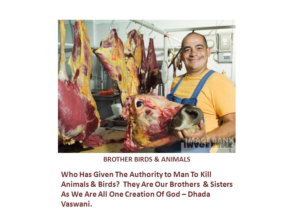 BROTHER BIRDS & ANIMALS Who Has Given The Authority to Man To Kill Animals & Birds.