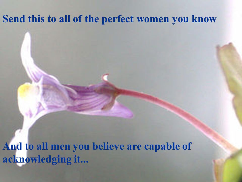 Send this to all of the perfect women you know And to all men you believe are capable of acknowledging it...