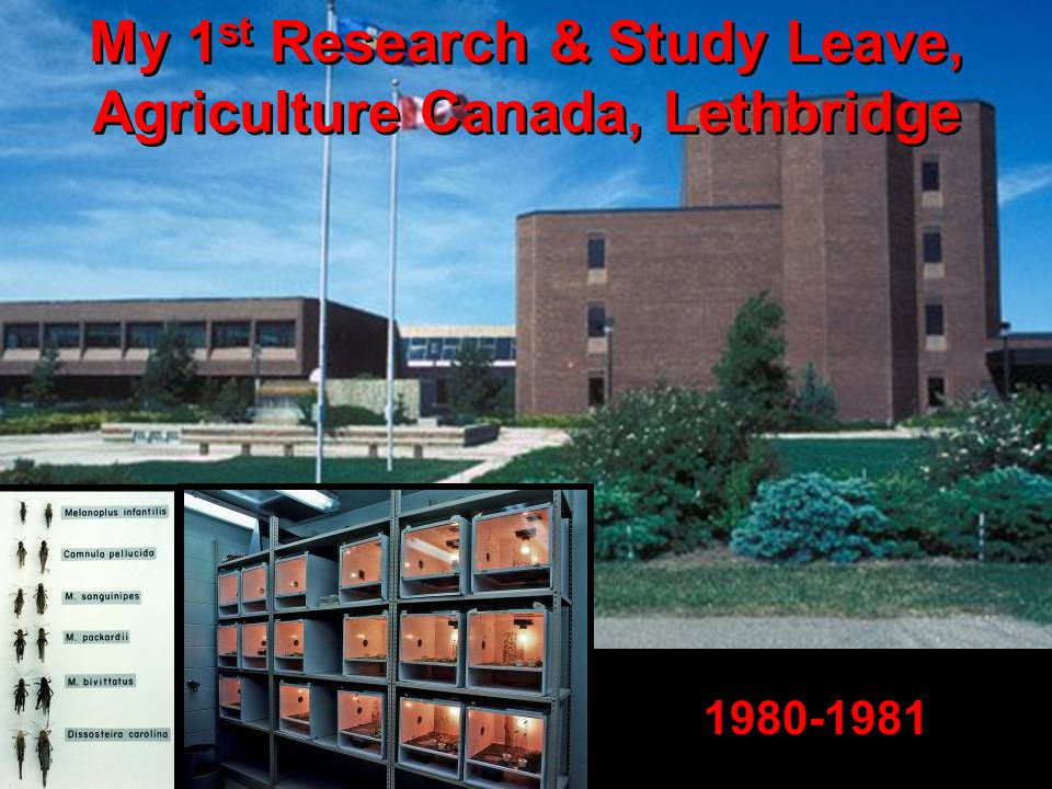 My 1 st Research & Study Leave, Agriculture Canada, Lethbridge 1980-1981