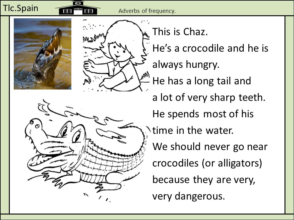 Tlc.Spain Adverbs of frequency. This is Chaz. He's a crocodile and he is always hungry. He has a long tail and a lot of very sharp teeth. He spends mo