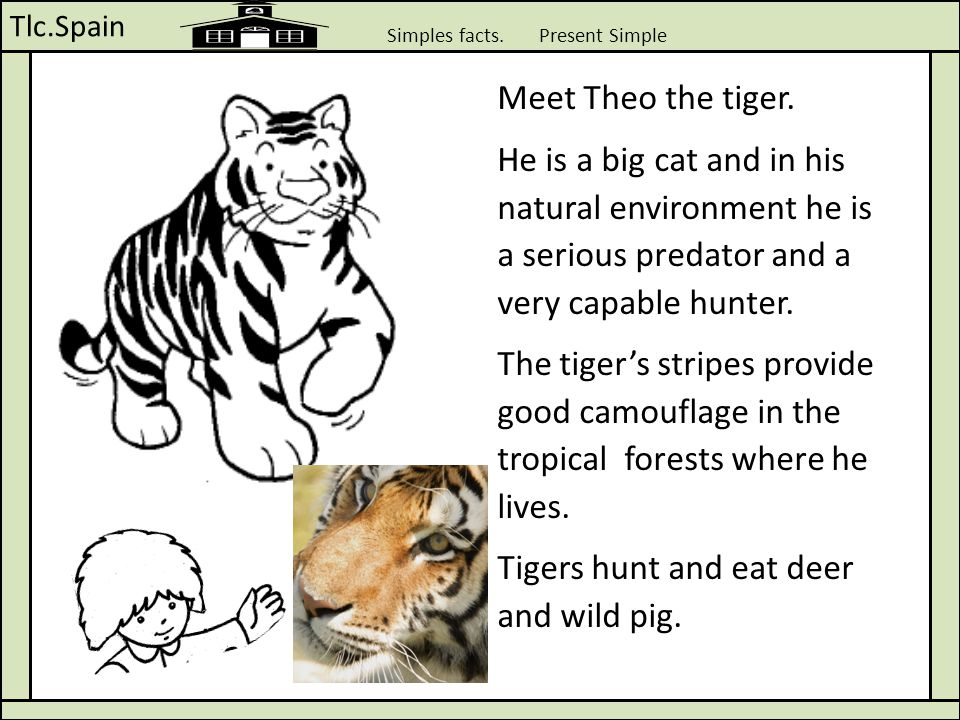 Tlc.Spain Simples facts. Present Simple Meet Theo the tiger. He is a big cat and in his natural environment he is a serious predator and a very capabl