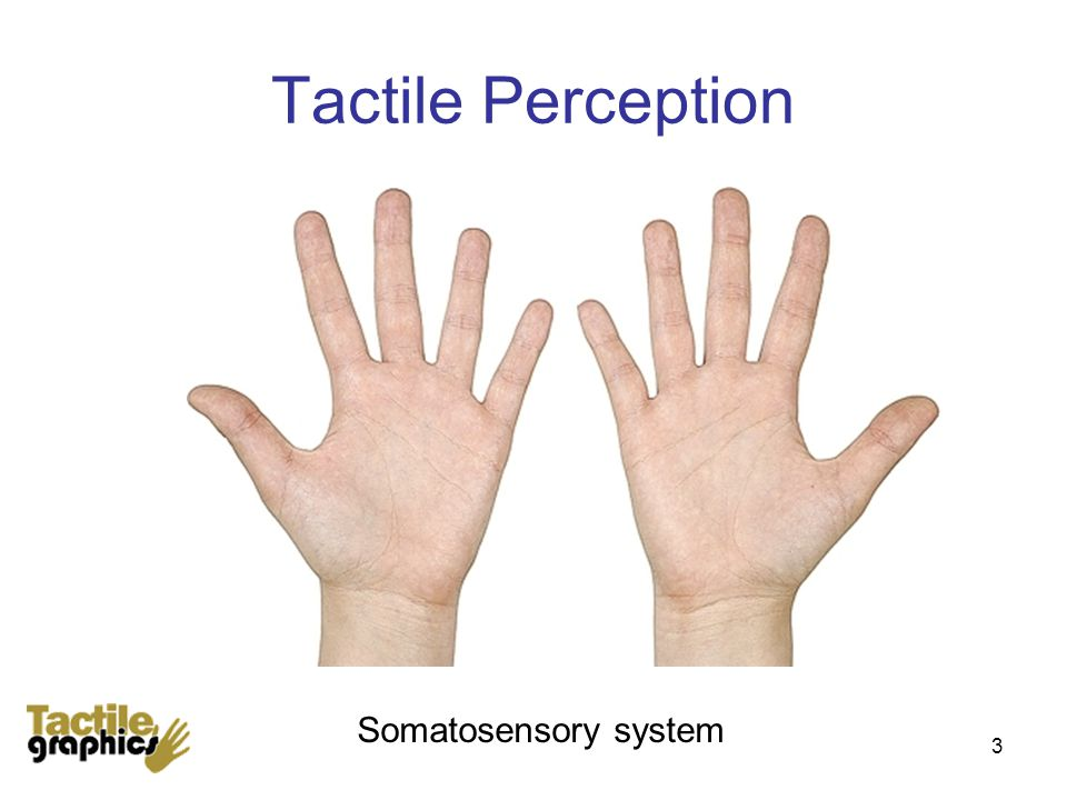 Tactile Perception 3 Somatosensory system